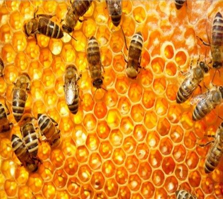 No single cause for mass honey bee deaths.