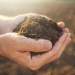 Soil Minerals
