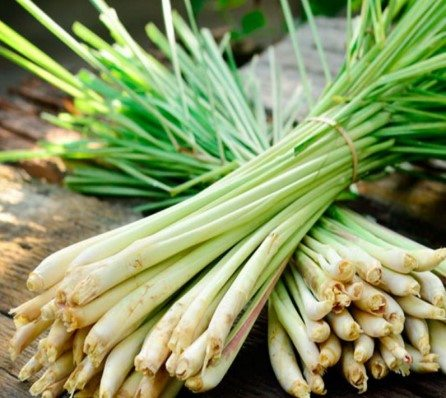 Australian lemongrass is as good as aspirin for headaches