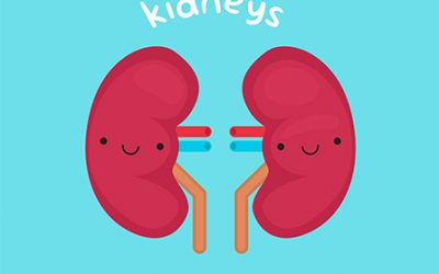 How To Improve The Health Of Your Kidneys